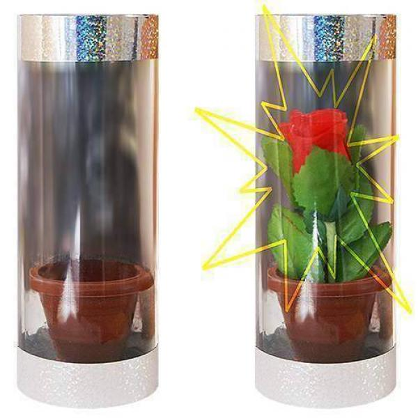 Appearing Rose in Tube