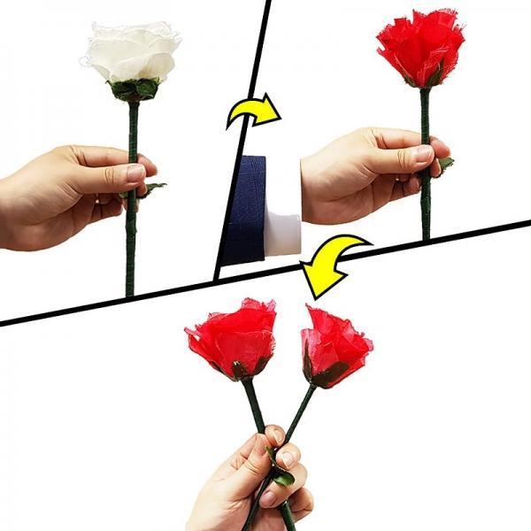 Color Change Rose Ver. 2 by JL
