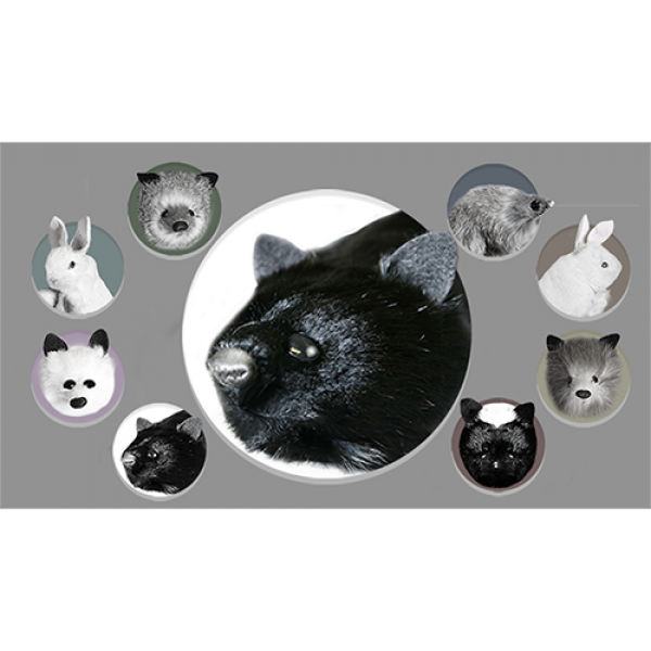 Black Fox Spring Animal by Magic Masters